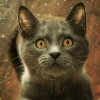 CryptoKitties Come of Age With $12 Million in Venture Funding