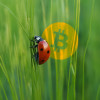 Bitcoin Core Developer Revealed as Bitcoin Cash Bug Informant
