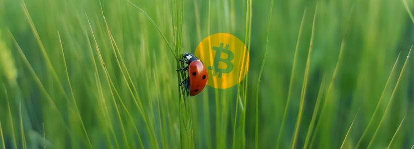 Bitcoin Core Developer Revealed as Bitcoin Cash Bug Informant
