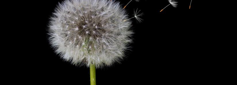 """The need for """"Dandelion"""" to bring greater privacy on the blockchain"""