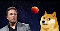 Dogecoin surges 68% in past week, Elon Musk jokes about it on Twitter