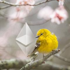 The curious case of Ethereum's missing warrant canary