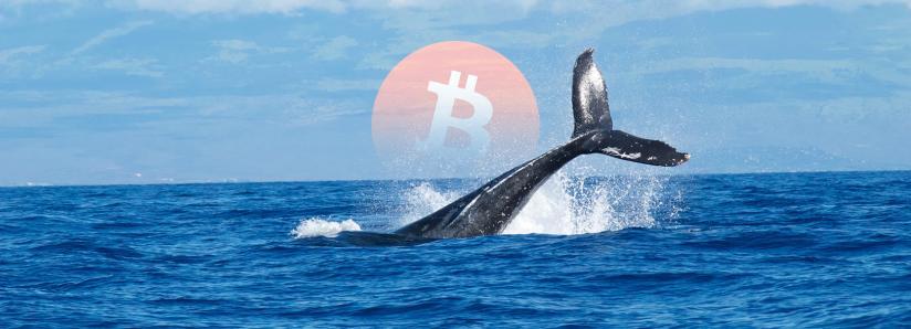 Massive Bitcoin whale moves more than $1.3 billion worth of BTC