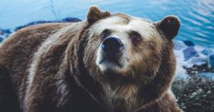 A bearish technical analysis for Bitcoin, Ethereum, XRP and Litecoin; but what if bullish?