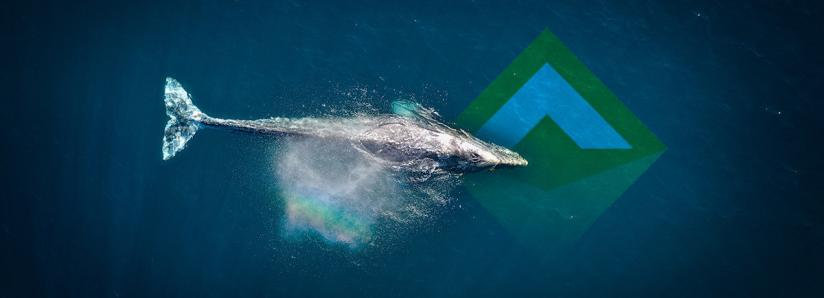 MakerDAO whale with 94% voting power reduces Dai stability fee by 4%