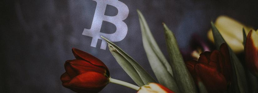 Craig Wright says there is a third Tulip Trust; what does this mean for Bitcoin?
