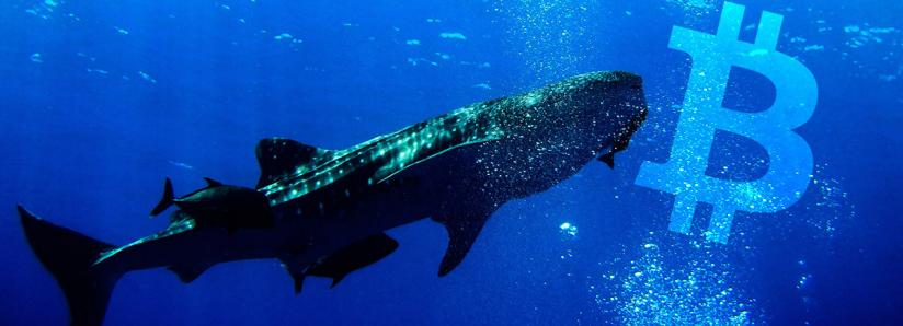 Here's how to trade like a Bitcoin whale with 'no less than $100 million'