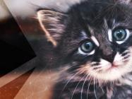 Millions of Dollars Worth of Cats are Still Infesting the Ethereum Network