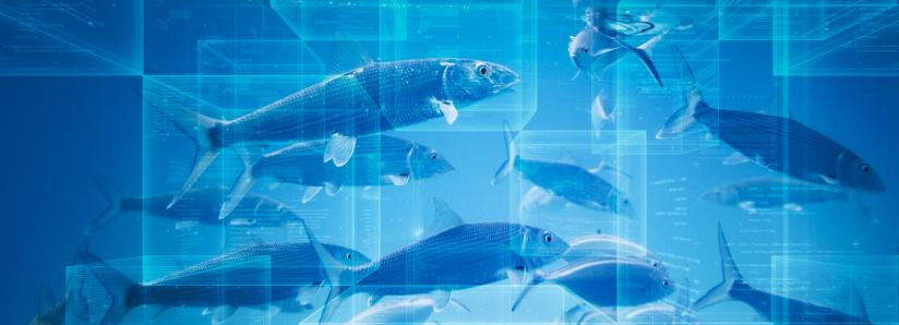 Do You Know Where Your Fish Is Coming From? Blockchain May Provide the Answer