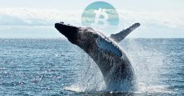 Two $10 Million Bitcoin shorts opened at $10k: are whales anticipating a severe correction?