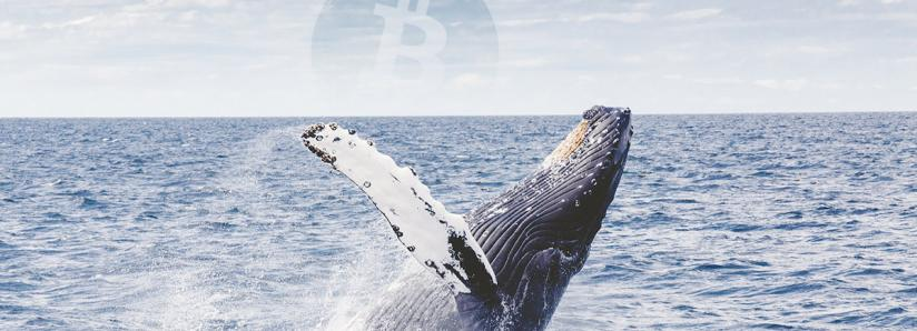 Research: Bitcoin (BTC) Whales Not Moving the Cryptocurrency Market
