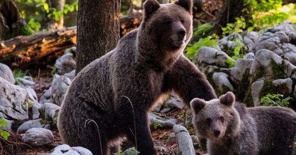 Blockfolio's CEO: How to Thrive During a Brutal Bear Market [Interview]