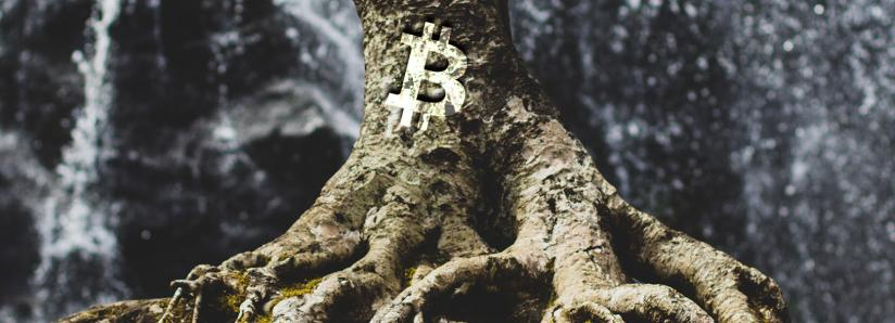 Taproot, the new update that will revolutionize the Bitcoin blockchain