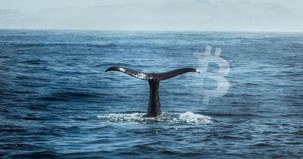 Bitcoin whale activity suggests July could be a great month for BTC
