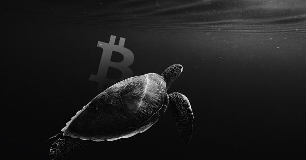 Bitcoin's network growth is declining; here's what it means for the bulls