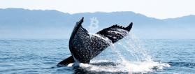 Third largest Bitcoin whale purchases BTC worth $37.5 million