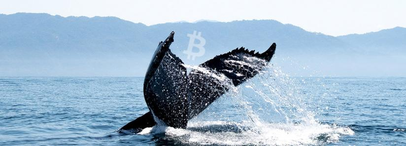 Bitcoin's halving sent on-chain metrics through the roof while whales accumulate