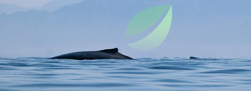 Bitfinex whales are flipping short on Bitcoin as institutions grow more active than ever