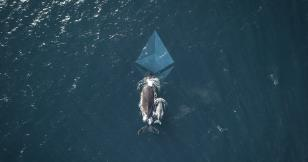 Whales might've caused Ethereum's (ETH) 50% dive on Kraken, says CEO