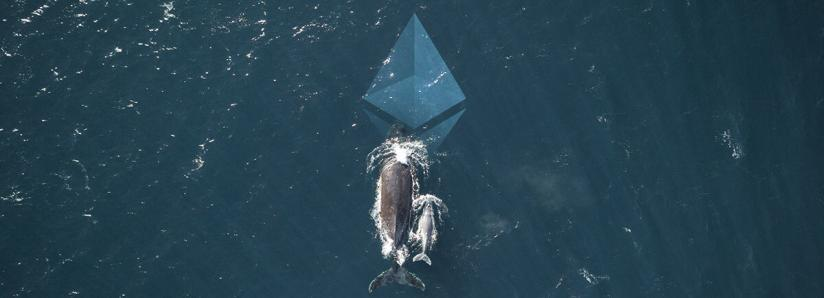 "Coinbase's earliest investor starts accumulating Ethereum ""again,"" joining whales"