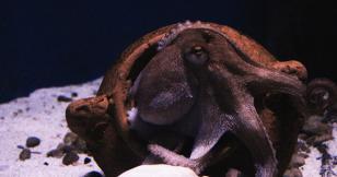 Strix Leviathan launches proprietary trading platform Octopus