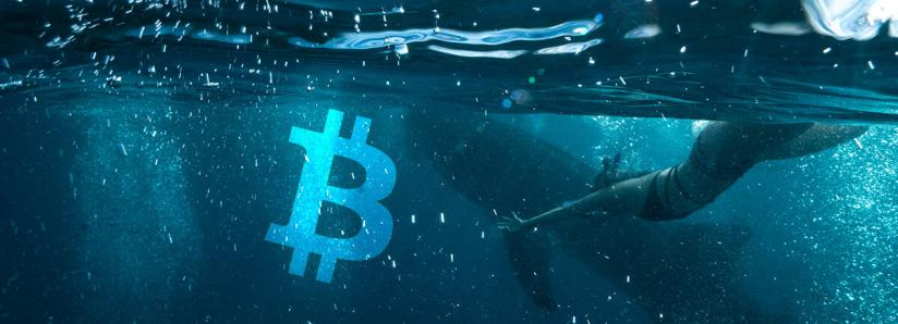 """New Glassnode metric calculates profit/loss for """"moved"""" Bitcoin, """"Whales"""" seen stacking up on BTC"""