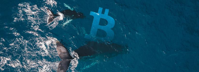 Whales hold steady: On-exchange Bitcoin supply stagnates despite rally past $11k