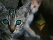 """Crypto research firm: DeFi, not CryptoKitties, is giving """"real value"""" to Ethereum"""