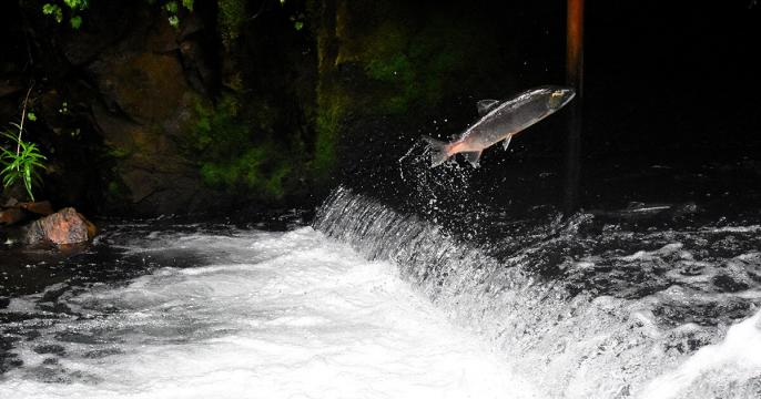Norway turns to IBM blockchain for sustainable salmon—and activists are probably happy