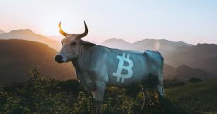 """Synthetix founder calls Bitcoin's weekly chart the """"most bullish thing"""" he has seen"""