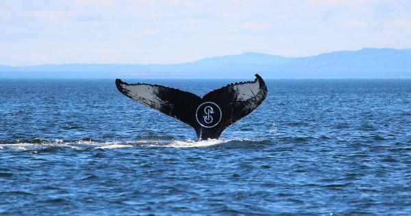 Yearn.finance (YFI) fell to four digits—but are whales accumulating?