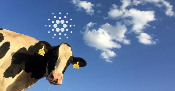 Introducing BeefChain, a rancher-to-retail supply chain traceability solution using Cardano