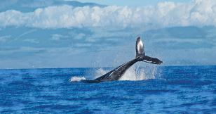 Is Bitcoin price manipulation by whales a real thing?