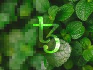 Doja Cat's first 'green' NFTs are going live on Tezos (XTZ) today