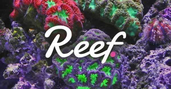 """CEO of Reef Chain says """"get ready for the ultimate new chain"""""""