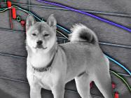 Traders lost $200 million trading Dogecoin and Shiba Inu (SHIB) yesterday