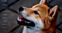 Crypto.com report shows Shiba Inu (SHIB), Dogecoin (DOGE) users led altcoin surge in 2021