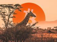 Data: Bitcoin (BTC) adoption grows 1,200% in Africa