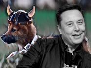 Shiba Inu-inspired 'Floki Inu' pumps 250% after Elon Musk reveals his puppy