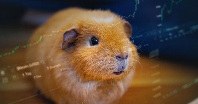 Meet Mr. Goxx: The crypto trading hamster who 'hodls' Tron, XRP, and Cardano