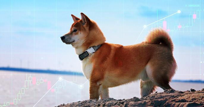 Data: Shiba Inu (SHIB) whales are responsible for 300% price jump