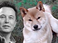 'Dogefather' does it again: Why are 'petcoin' meme cryptos off the leash?