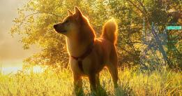 Analysts say these reasons were behind Shiba Inu's (SHIB) 300% rise last month