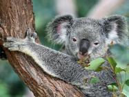 Australian island to offer $300 million worth of tokenized shares
