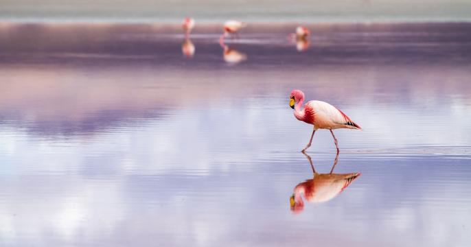 """Founder of China's NEO says DeFi is just getting started, launches """"Flamingo"""""""