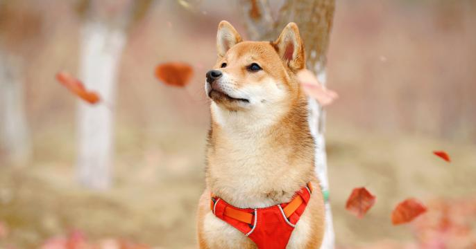 Dogecoin (DOGE) surges over 100% as Bitcoin bull run takes BTC to $33,000