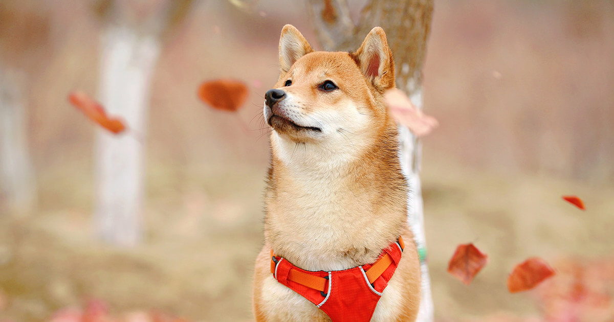 Dogecoin leads gains as crypto markets crash further