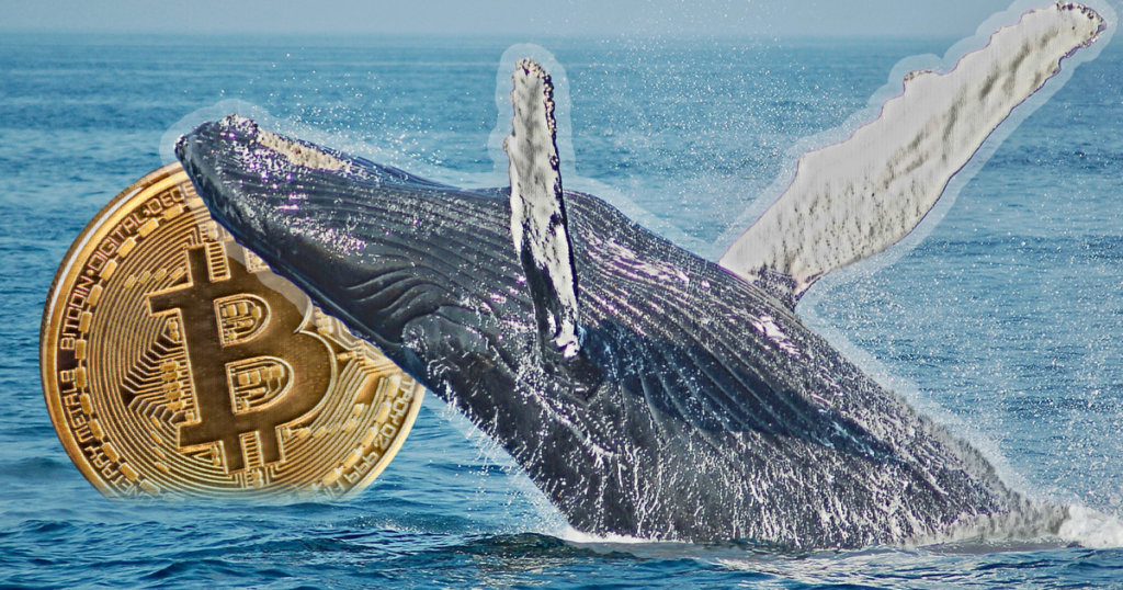Velryby v posledních týdnech nakoupily 130 000 BTC
